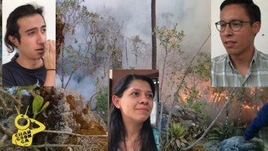 Photo of #Morelia Chavos Opinan: Apoyo Al Medio Ambiente Debe Hacerse Fuera De Redes Sociales