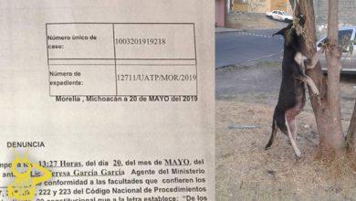 Photo of #Morelia Levantan Denuncia Por Perrita Embarazada Ahorcada En La Isaac Arriaga