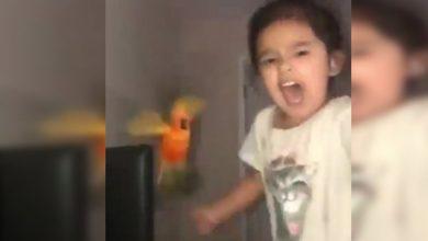 Photo of #Video Niña Entrena A Su Periquito Para Que Ataque Cuando Ella Ordene