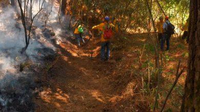 Photo of #Uruapan Controlado Y Liquidado: Incendio En Montaña Del Parque Nacional