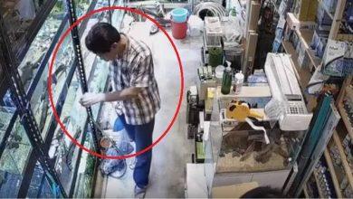 Photo of #Video Vato Envenena Con Polvo Tóxico A Decenas De Pececitos