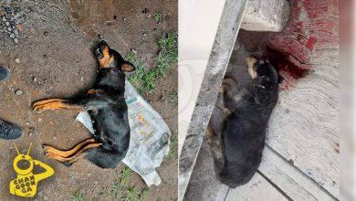 Photo of #Michoacán Fiscalía Abre Investigación Por Matanza Salvaje De Perros En Santa Ana Maya