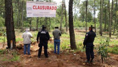 Photo of #Michoacán Clausuran Varias Huertas Ilegales En Ario; Dañaban Al Medio Ambiente