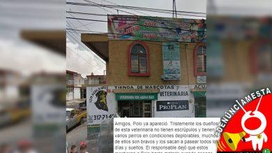 Photo of #Denúnciamesta Moreliana acusa a canes de veterinaria de atacar hasta la muerte a su mascota