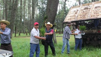 Photo of Reforestarán Con 46 Mil Pinos En Comunidades Indígenas De La Zona Norte De Uruapan