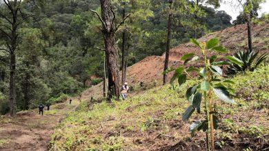 Photo of #Michoacán Incrementan Huertas Ilegales De Aguacate En Charo Y Morelia