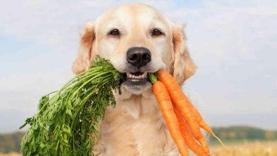 Photo of WTF!? Inventan Croquetas Veganas Para Alimentar A Tu Perro