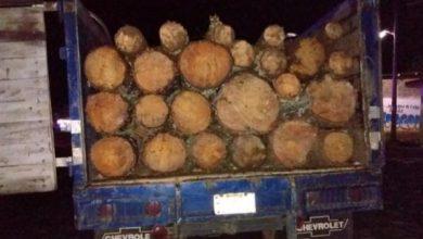 Photo of #Michoacán Agarran A 4 Por Transportar Madera Ilegal, Dos Menores Incluidos