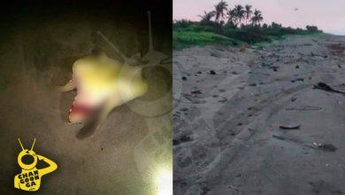 Photo of #Michoacán Reportan Más Ataques De Perros Vs Tortugas En La Costa