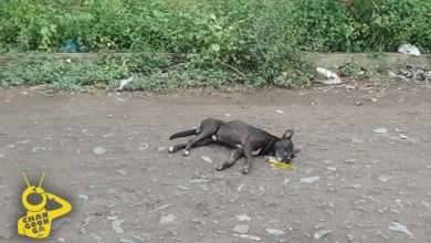 Photo of #Michoacán Vecinos Hallan Perros Envenenados En Apatzingán