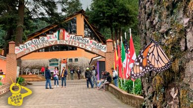 Photo of #Michoacán Emiten Código Del Turista Pa´Poder Ir A Ver A Las Mariposas Monarcas