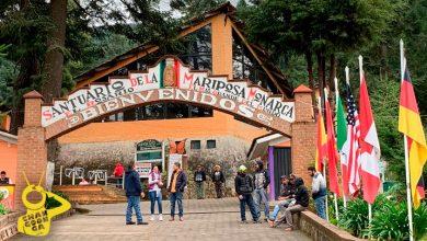 Photo of #Michoacán Santuarios De Mariposa Monarca Reabren Sus Puertas El 28 De Noviembre