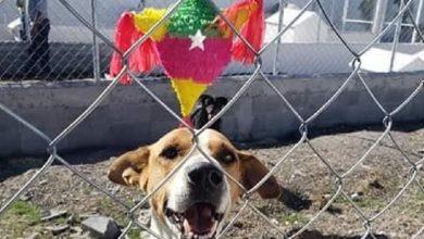 Photo of Pasa En México: Activistas Organizan Posada Para Perritos En Albergue