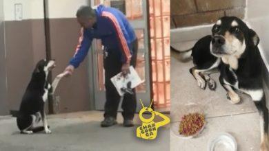 Photo of #AlertaPeluda Buscan Hogar Para Perrito Que Pide Permiso Educadamente Para Entrar A Resguardarse