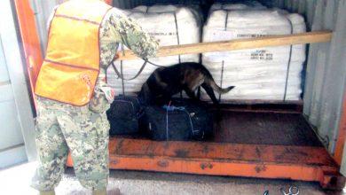 Photo of Con Ayuda De Perro Policía, Hallan 56 Kilos De Cocaína En Lázaro Cárdenas