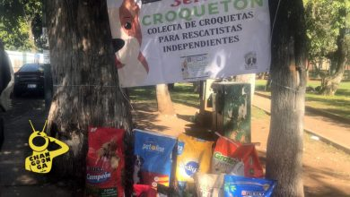 Photo of #Morelia Apoya A Más De 60 Peludos Rescatados Con El Croquetón