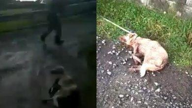 Photo of #DeShock Cazador Dispara, Golpea Y Arrastra A Perrita Porque Se Le Da La Gana