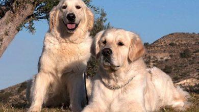 Photo of OMG! Millonarios Pagarán 700 Mil Pesos Por Cuidar A Sus Dos Perros