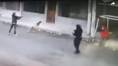 Photo of Par De Peludos Defienden A Mujer De Asaltante Armado En Plena Calle