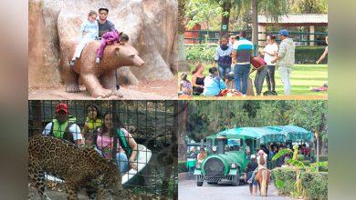 Photo of Prepara Tus Fotos Antiguas Tomadas En Zoo De Morelia, Armarán Álbum Por 50 Aniversario
