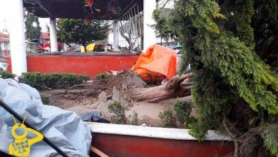 Photo of #Michoacán Lluvia Y Fuertes Vientos Tumban Árboles En Paracho