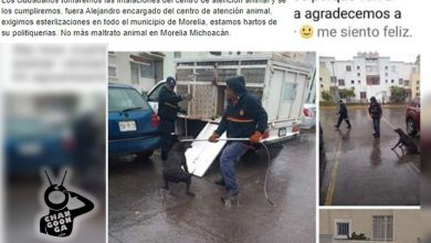 Photo of #Morelia Convocan Toma En Centro De Atención Animal Para Frenar Maltrato