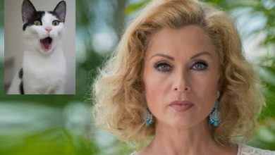 Photo of Si Veo Un Gato Lo Atropello: Leticia Calderón Surge Como #LadyMataGatos