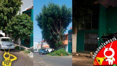 #Denúnciamesta Reportan tala de árboles en lugar de podarlos