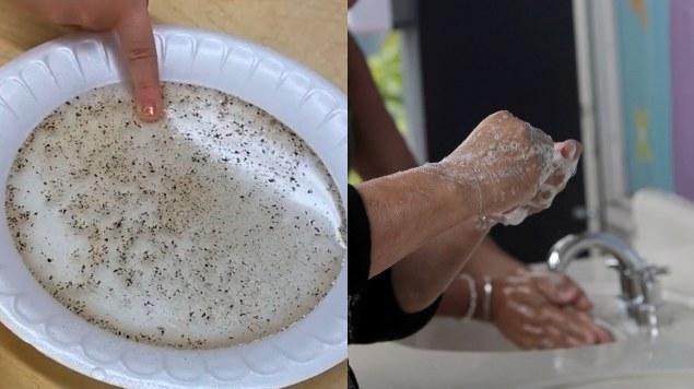 Experimento con Pimienta Para que Niños Aprendan A Lavarse Las Manos