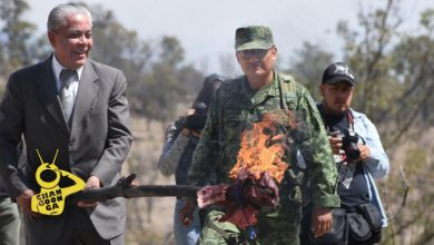 Photo of #Michoacán Militares Y FGR Queman Media Tonelada De Mota, Cristal Y Coca