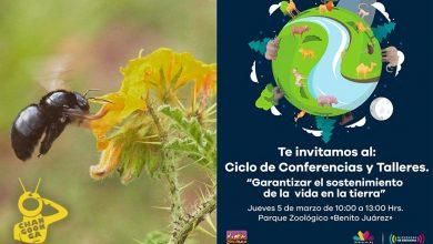 Photo of Zoo Morelia: Invita A Niños A Talleres Para Garantizar La Vida Silvestre, Este 5 De Marzo
