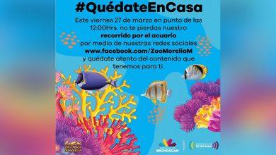 Photo of ¡Desde Tu Casa! Tus Hijos Vivirán Recorrido Acuario Del Zoo De Morelia, Este 27 De Marzo
