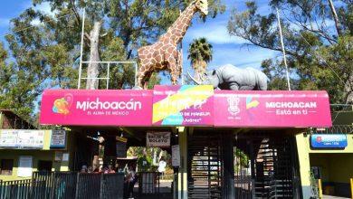 Photo of Abasto De Alimento En Zoo De Morelia, Garantizado Durante Cuarentena