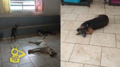 Photo of #Morelia Aumentan Solicitudes Para Adoptar Perros, Pero Las Suspenden Por El Momento