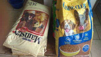 Photo of Refugio De Animales En Morelia Se Queda Sin Comida, Disminuyen Donaciones Al 100%