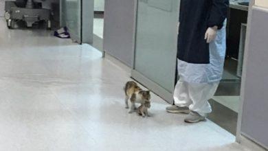 Photo of Mamá Michi Lleva A Su Gatuno Hijo A Hospital Para Que Lo Atiendan