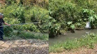 Photo of #Morelia En Pleno Río Encuentran A Cocodrilo Que Se Escapó Hace Un Mes