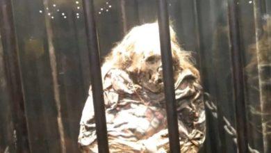 """Photo of """"Liberarán"""" A Bruja Momificada En Museo De Guanajuato"""