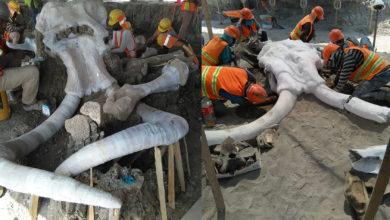 Photo of Encuentran Restos De 60 Mamuts En Construcción De Aeropuerto De Santa Lucía