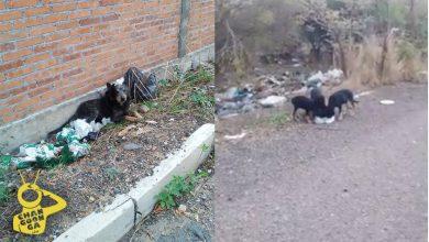 Photo of #Morelia Tiran A La Calle A Perrita Y Sus Cachorros; Piden Apoyo Para Buscarles Hogar
