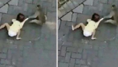 "Photo of Viralizan Video De Mono ""Secuestrando"" A Niña, Pero Estaba Siendo Maltratado"