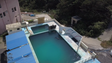 Photo of Tras 15 Años En Cautiverio, Muere Delfín En Acuario Abandonado