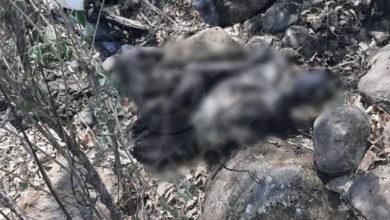 Photo of Macabro Hallazgo, Había Cuerpos Momificados Y Maniatados Bajo Piedras En Jacona
