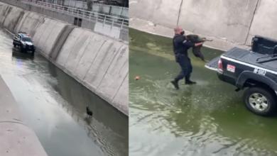 Photo of #Video Polis Salvan La Vida De Perrita Que Cayó A Canal De Querétaro
