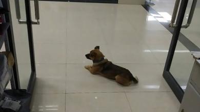 Photo of Perrito Espera Por Meses En Hospital A Su Dueño Que Murió De COVID-19