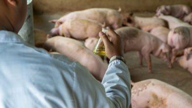 """Photo of WEEEY YA..! China Alerta De Gripe Porcina Con """"Potencial Pandémico"""""""