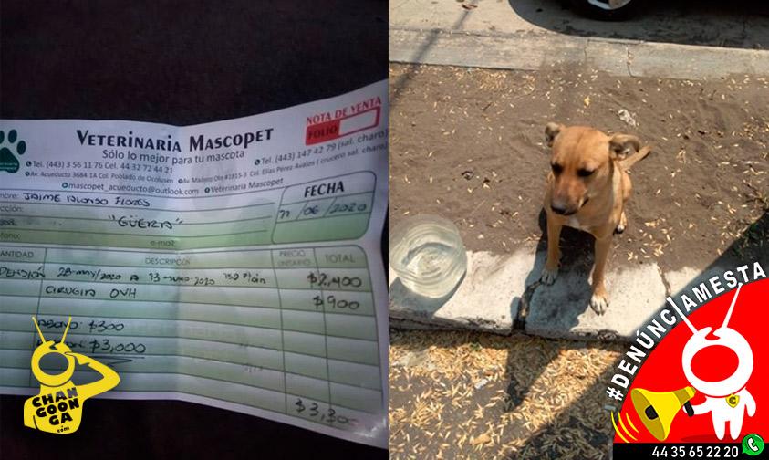 Photo of #Denúnciamesta Ayuda a perrita callejera, no la dejan ir de veterinaria por falta de pago