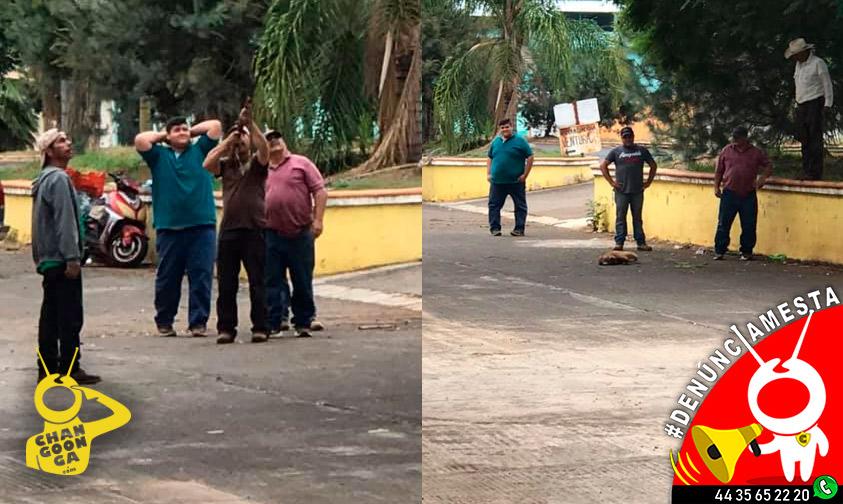 #Denúnciamesta Tipos disparan y matan a tejón que estaba en arbolito de Tocumbo