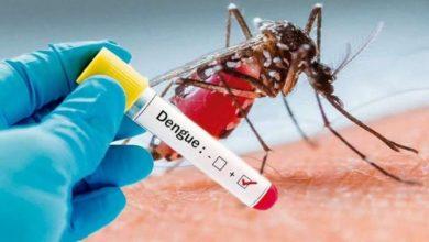 Photo of No Se Olviden Del Dengue Porque Ya Van 11 Muertes A Causa De La Enfermedad