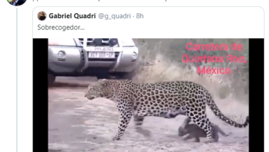 Tunden A Calderón, Pide Que Tren De AMLO No Aplaste A Leopardo… De Sudáfrica